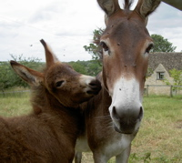 Tessie the donkey and her foal Tilly